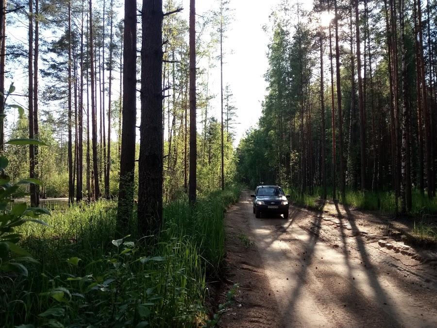 Шевроле Нива в лесу